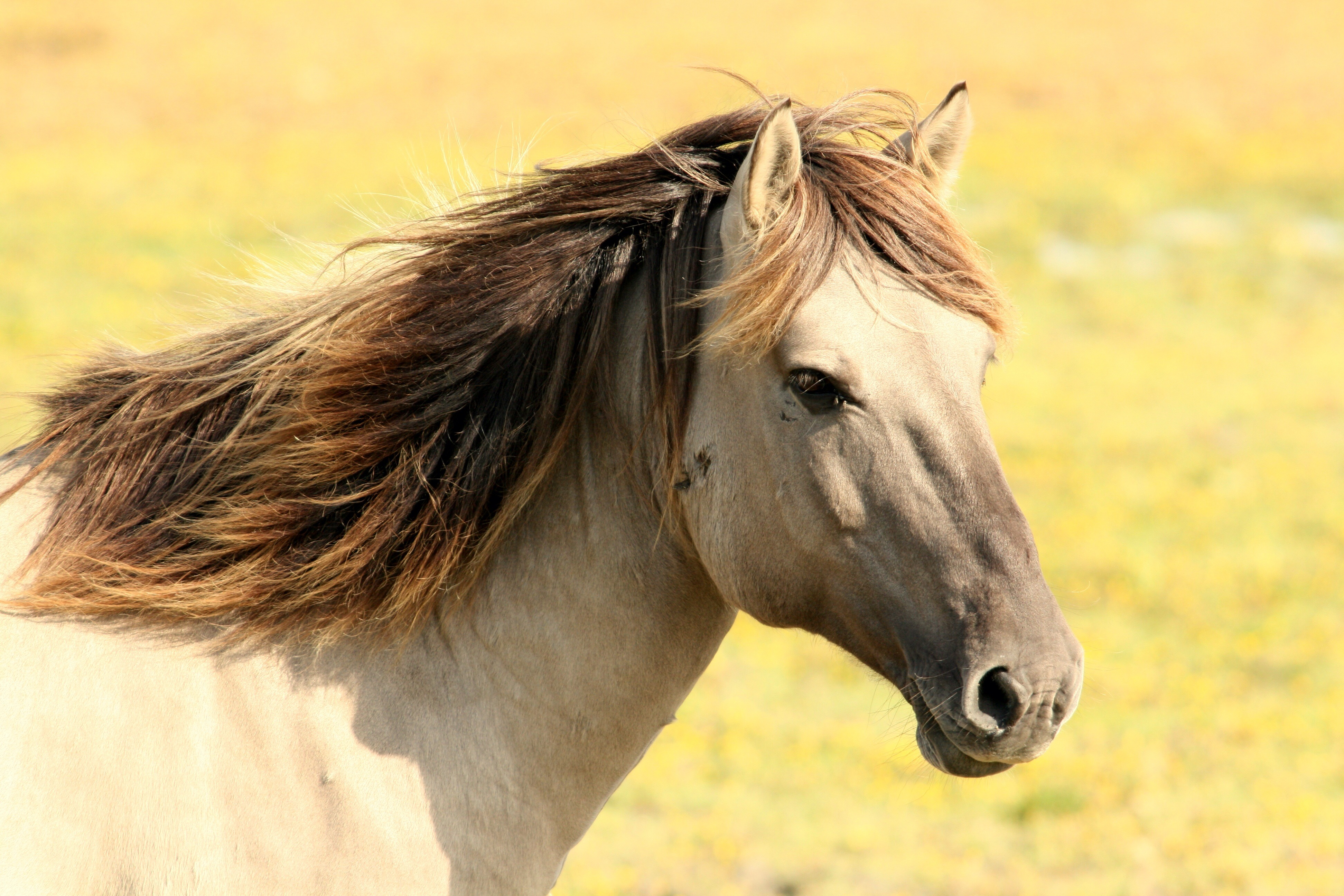 horse-197199