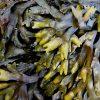 海藻が髪の毛に良いのは本当?摂取のしすぎには注意が必要かも!効果の期待できる海藻の種類と一日の摂取量について