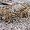 猪毛ブラシを使ったブラッシングのメリット一覧!猪毛ブラシに絡まった髪の毛の手入れの方法も紹介!