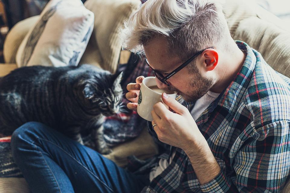 猫ソファ男性