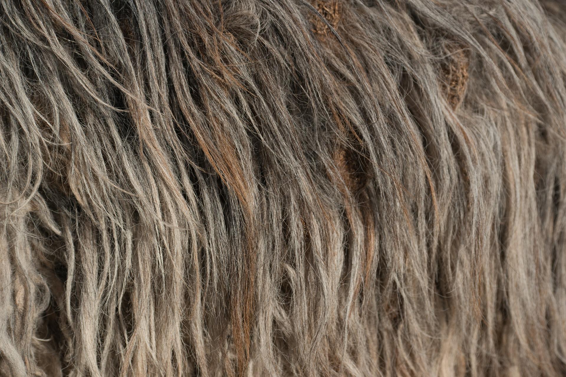 wool-2150633_1920