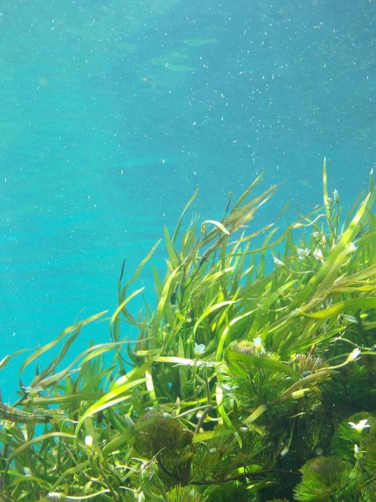 水中の海藻
