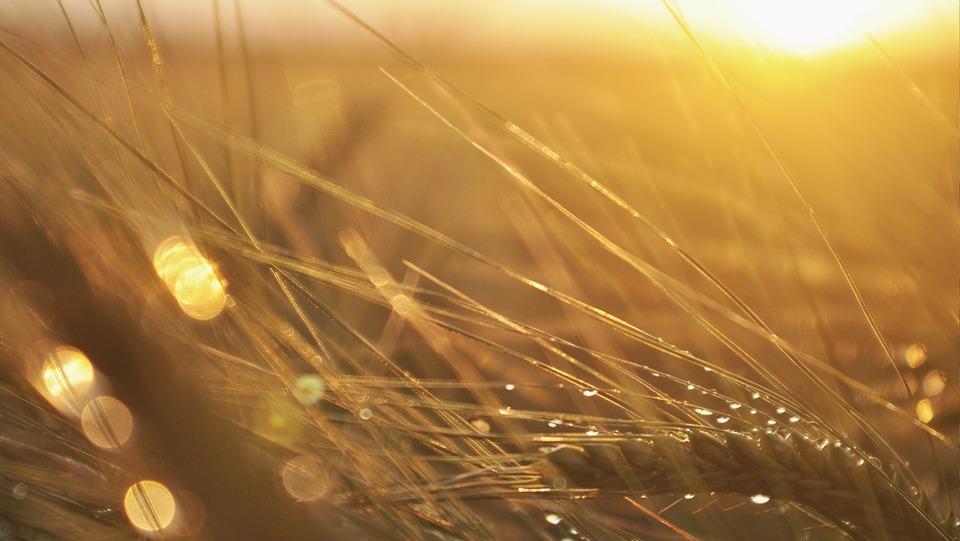 細胞 穀物 毛 自然 食材 植物